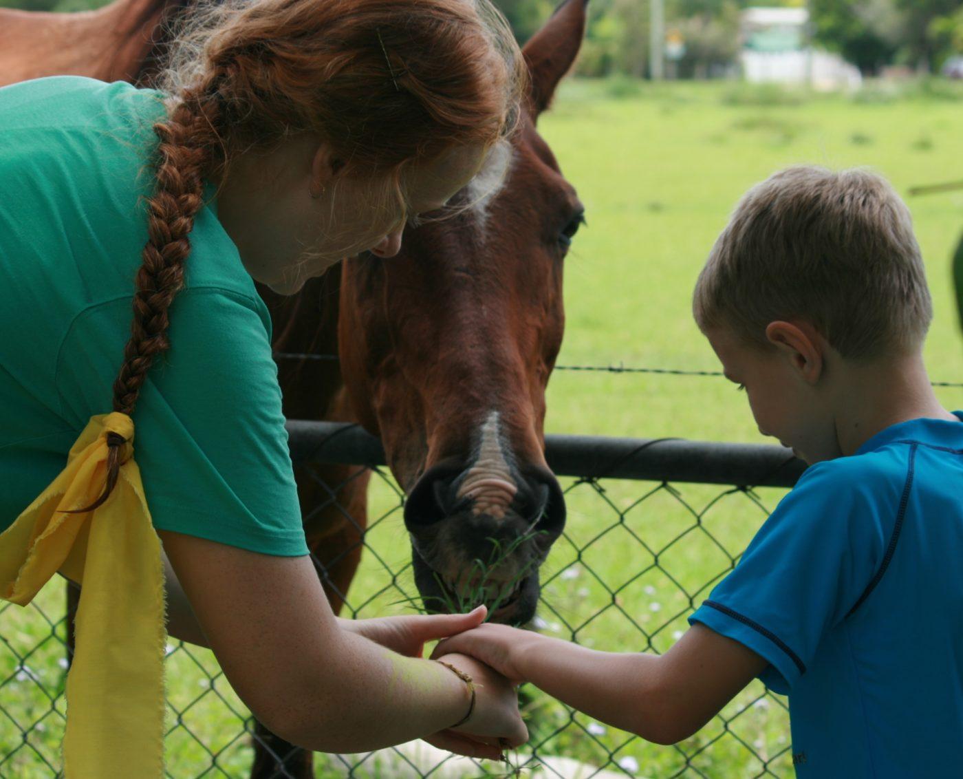 horse feeding buddies1